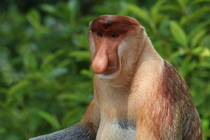Самые уродливые животные (11 фото)