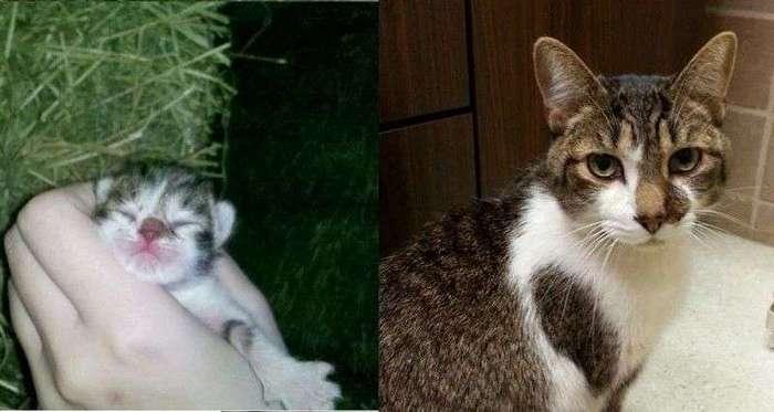 Первые и последние фотографии умерших домашних животных от скорбящих хозяев (20 фото)