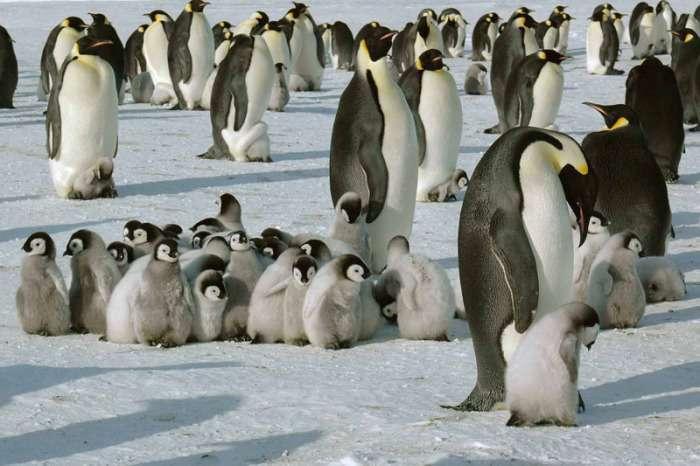 Глэмпинг на белом континенте: купольные домики в Антарктиде