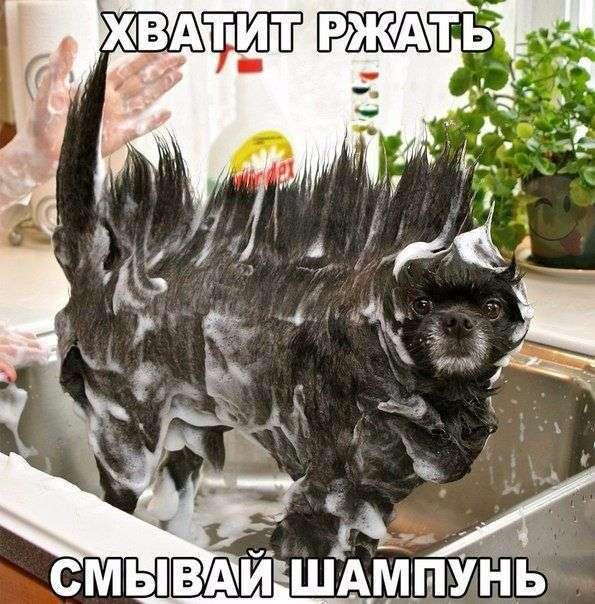Подборка прикольных фото №1506 (111 фото)