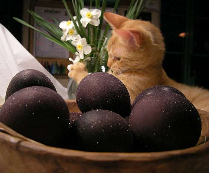 17 примеров изумительного декора яиц к светлому празднику Пасхи (18 фото)