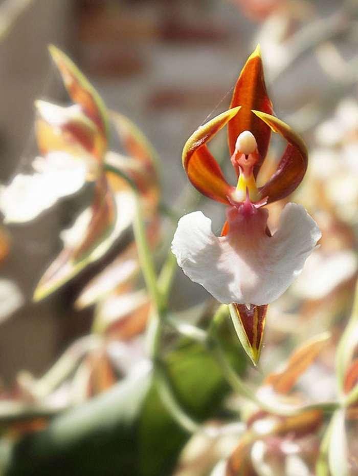 Удивительный мир цветов причудливой формы (18 фото)