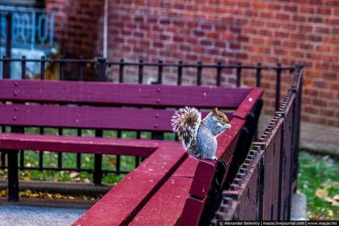 Нью-Йорк для нищебродов