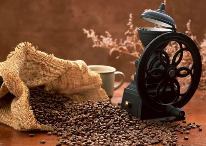Выбор кофе: робуста или арабика?
