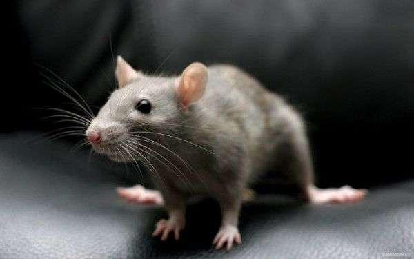 Животные, которые уничтожают другие виды (10 фото)