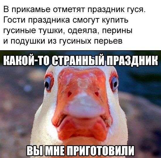 Подборка прикольных фото №1486 (109 фото)