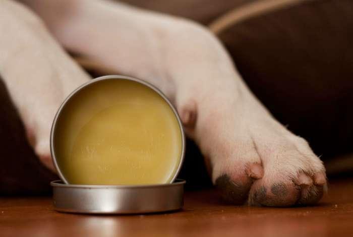 17 гениальных хитростей, которые будут полезны всем владельцам собак