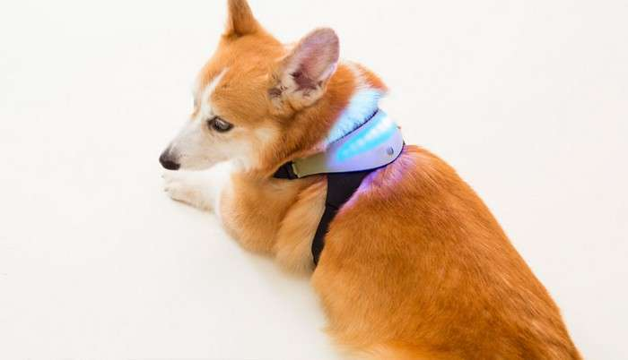 «Трудности перевода»: создан ошейник, который поймёт эмоции собак и переведёт их хозяину