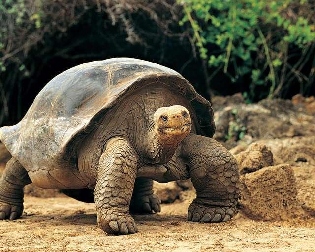 Чего мы не знали о животных (22 фото)