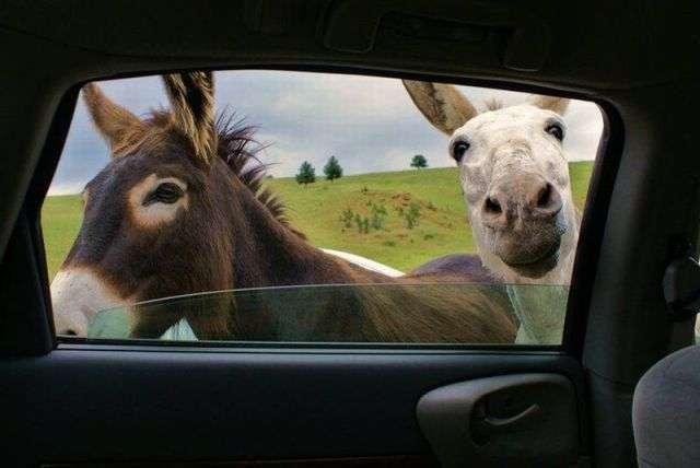 Забавные животные (37 фото)