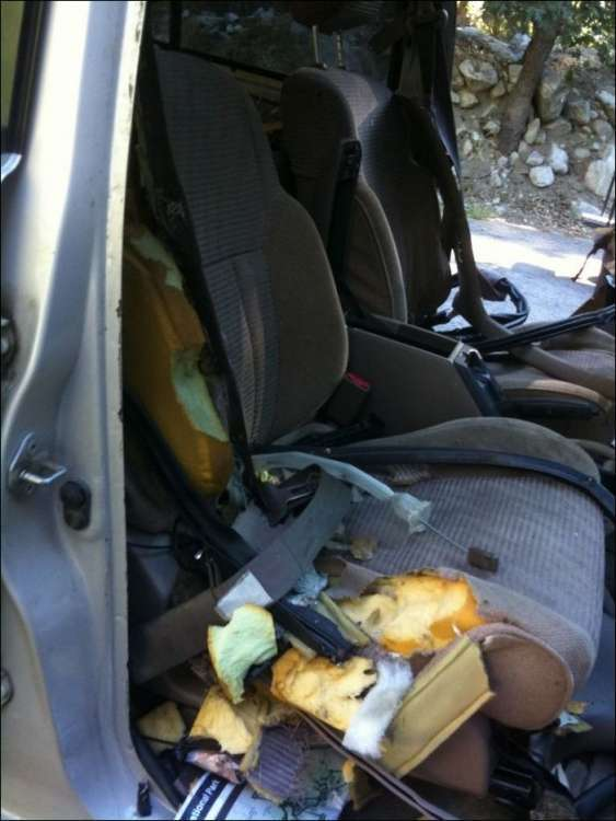 Медведь провел досмотр автомобиля (7 фото)