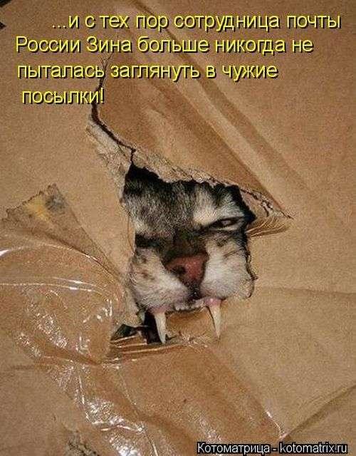 Домашние котики (50 фото)
