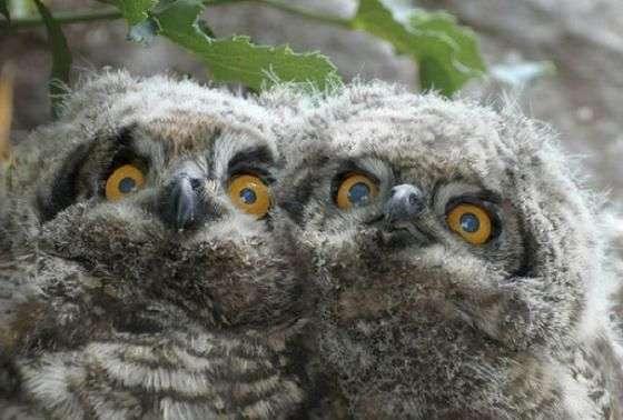 Веселые совы (22 фото)