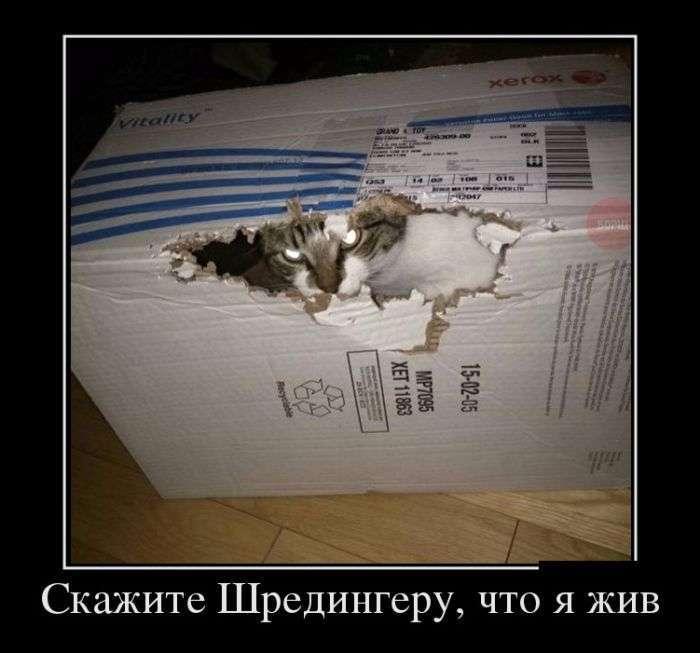 Демотиваторы №1333 (30 фото)