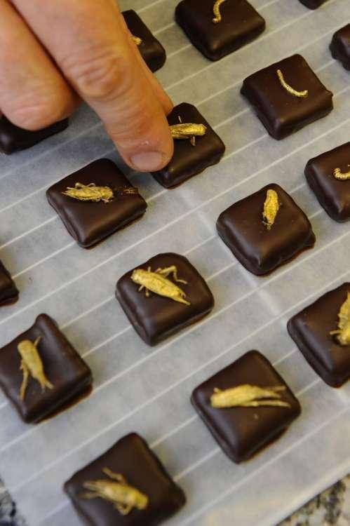 Конфеты с насекомыми из Франции (8 фото)