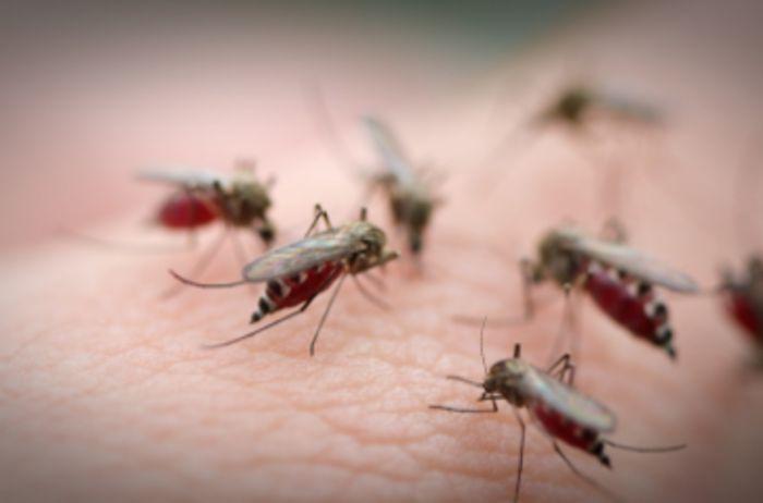 Достали мошки и комары? Воспользуйтесь этим