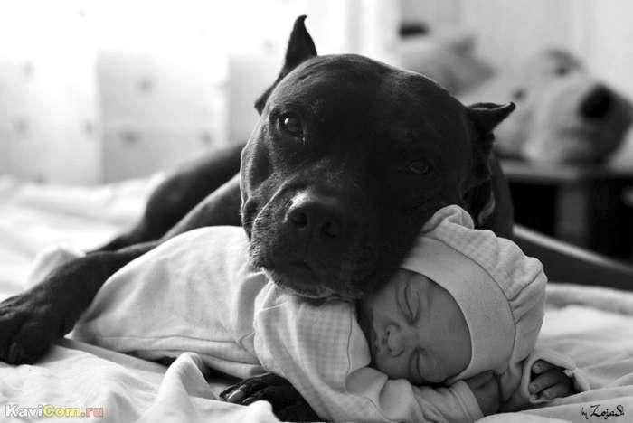 Кто самый преданный хозяину: собака, кот или лошадь
