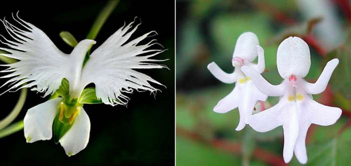 Прекрасные цветы, похожие на что угодно, только не на цветы