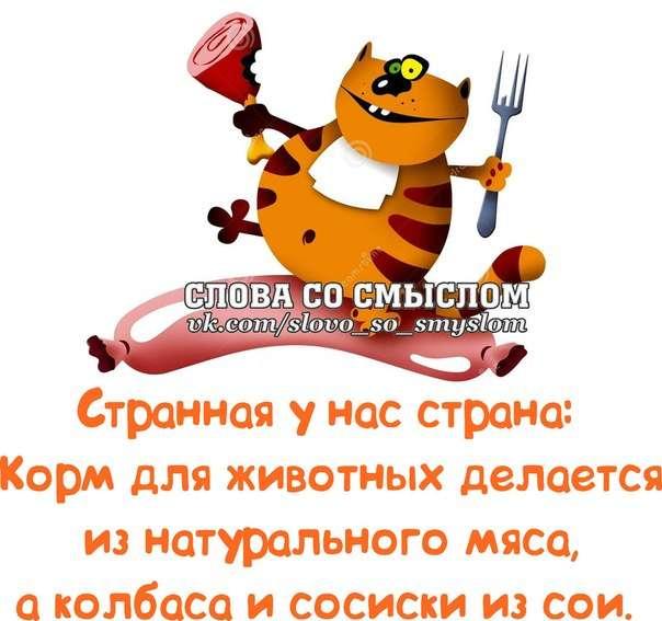 ПРИКОЛЬНЫЕ ФРАЗОЧКИ В КАРТИНКАХ понедельника