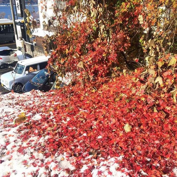 Первый снег ноября в Токио за 54 года