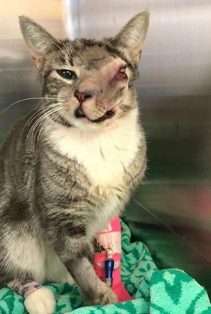 Кошка с огромной опухолью на морде была обречена, но случилось чудо