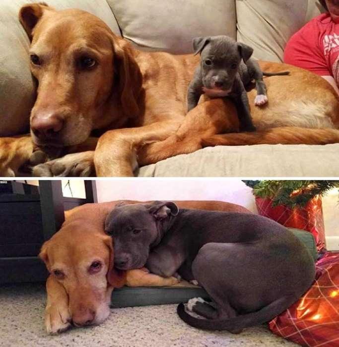 До и после: 20 фотографий друзей-животных, которые выросли вместе