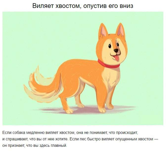 10 приемов для тех, кто всегда мечтал понимать собак.