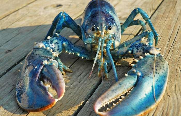 20 интересных фактов о животных,которые вы не слышали