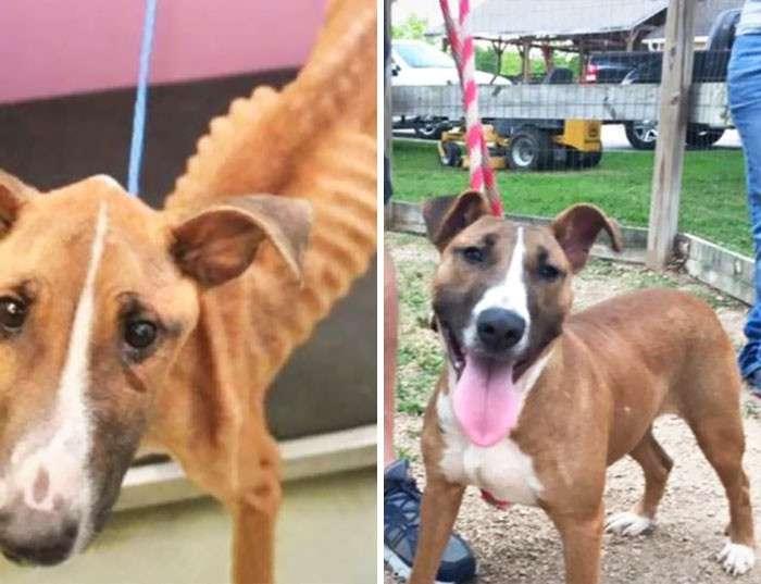 Собаки, которых спасла любовь