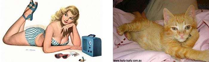 Котики, которые позируют точь-в-точь как модели в стиле пин-ап
