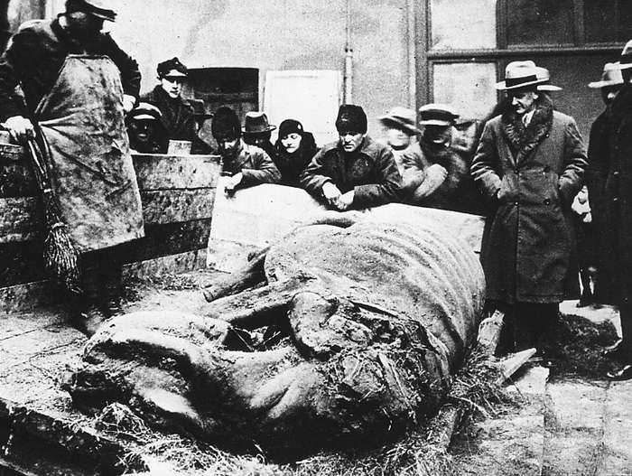 Находка туши шерстистого носорога в 1929 году
