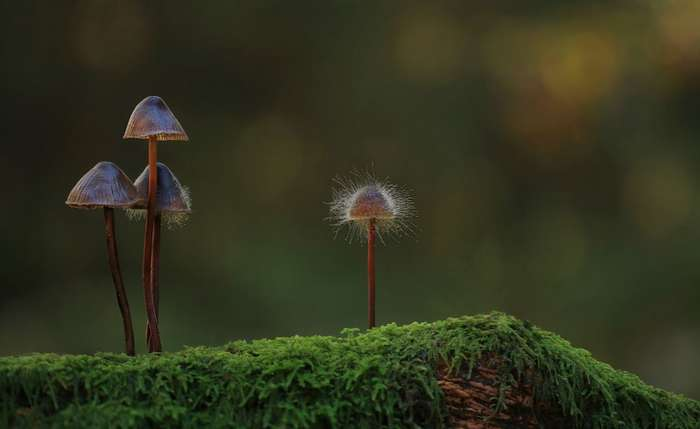 Грибы, грибки, грибочки
