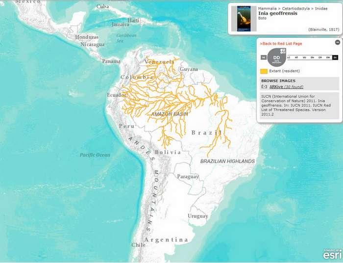 Амазонская иния или боуто (Boto)