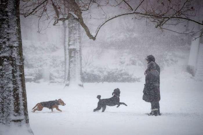 Снежная Америка