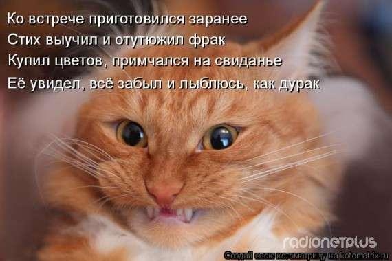 Весёлые котоматрицы