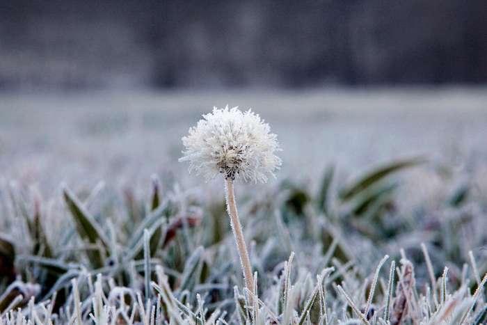 Последнему месяцу зимы посвящается…