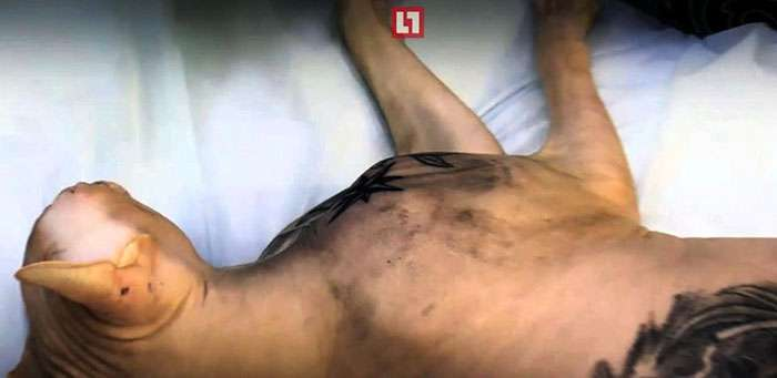 Екатеринбуржец сделал своему коту несколько тюремных татуировок