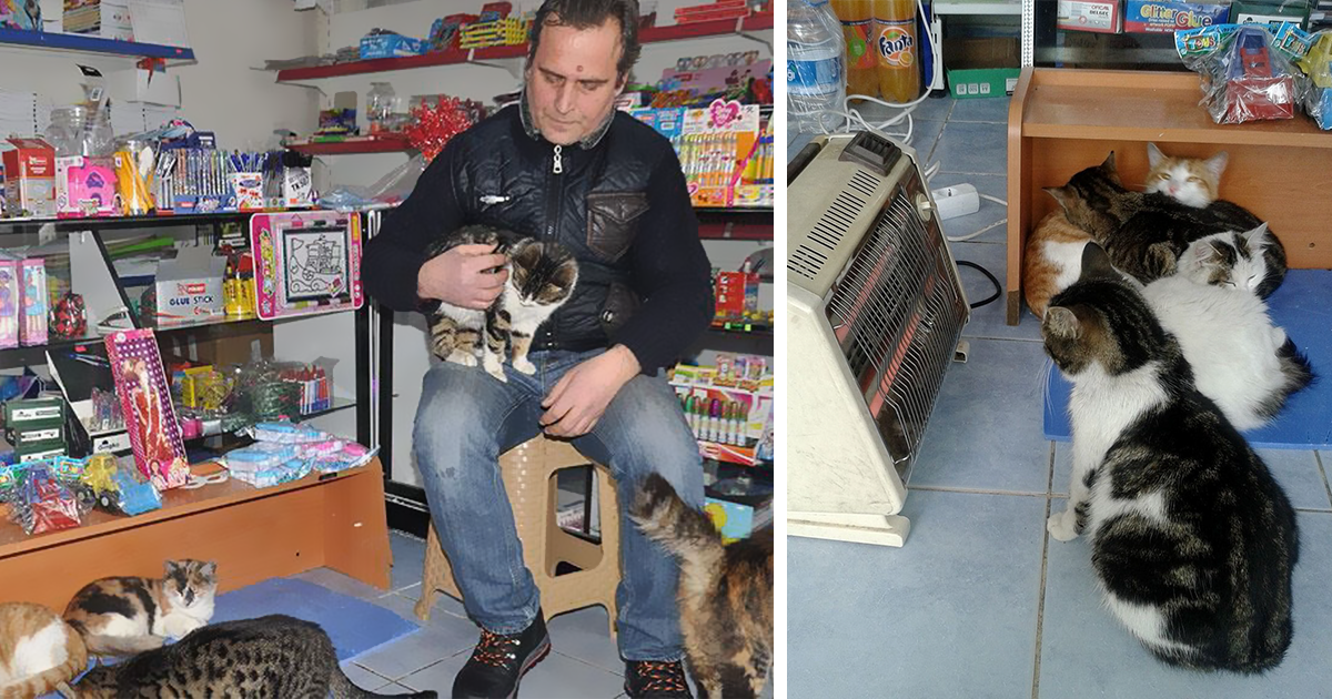 Сильнейшая снежная буря обрушилась на Стамбул, и вот как люди спасают бездомных животных