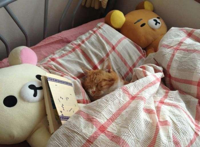 Уютные котики спят в кроватях как люди. Лучший флешмоб из Японии