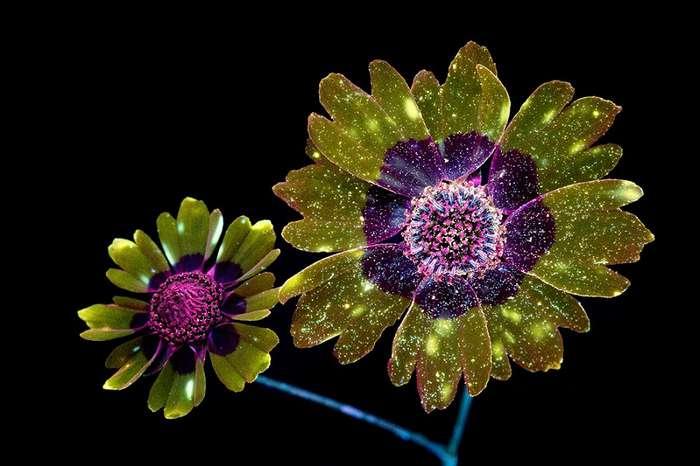 Ослепительные изображения светящихся цветов