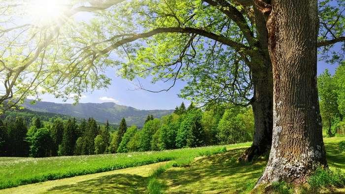 Целебная сила дерева. Как деревья нас лечат