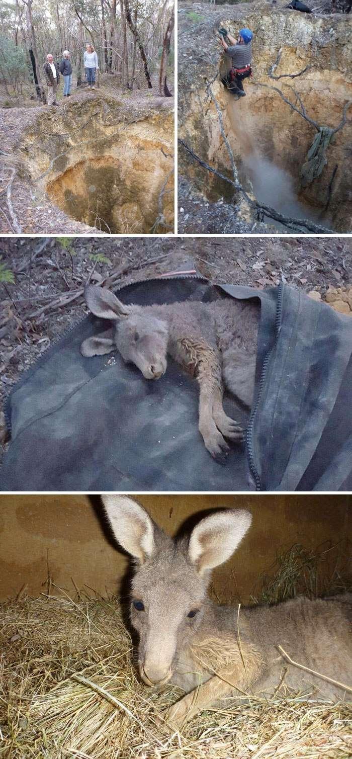 10 животных, находящихся на волосок от смерти, которых спасли неравнодушные люди.