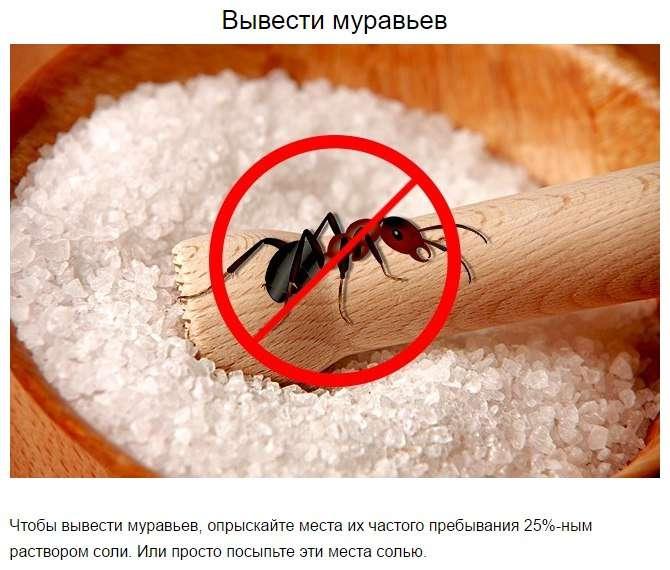 10 неожиданных ситуаций, в которых вам пригодится обычная соль.