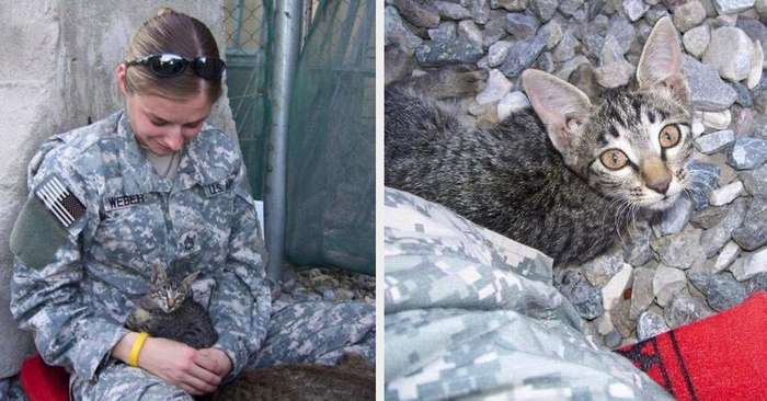 Эта женщина-военнослужащая отказалась оставить больного котенка одного в Афганистане