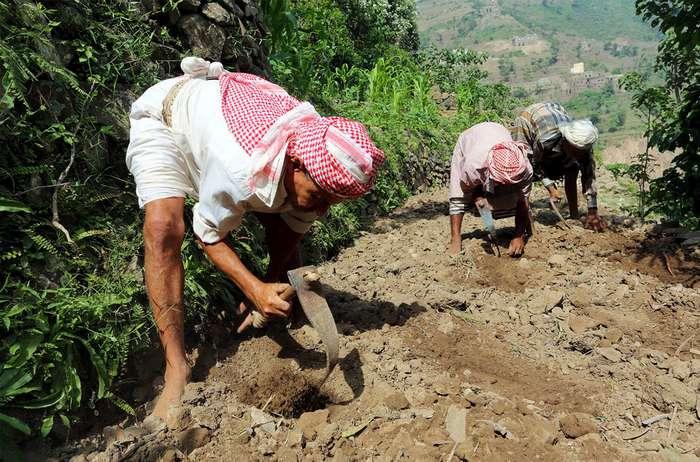Жизнь в зеленых горах Йемена