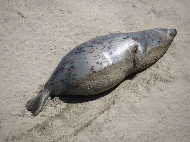 Вот как выглядят животные во время беременности.