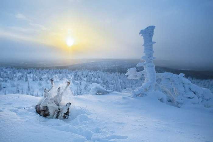 Фотографии Лапландии