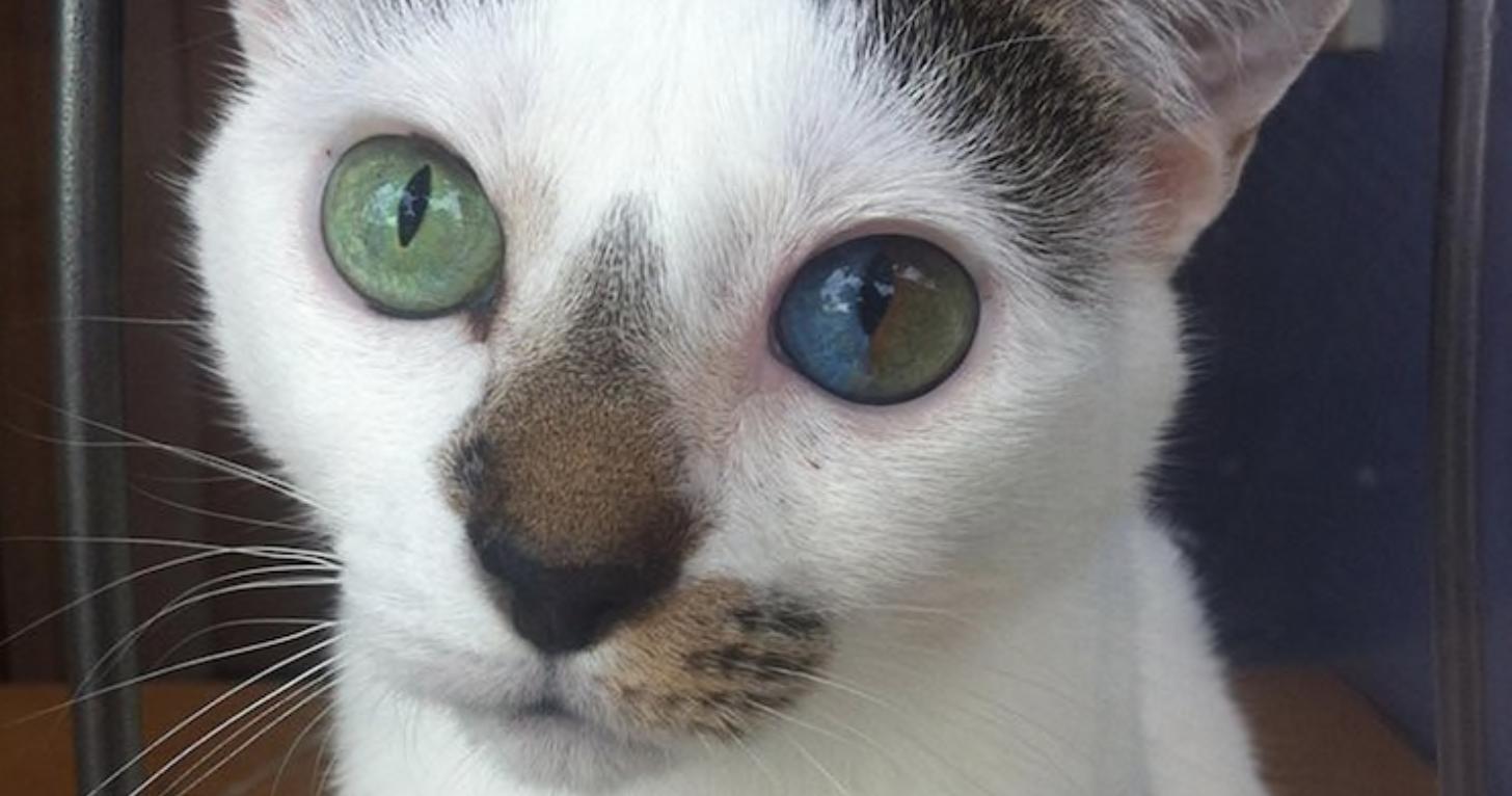 Красивая мутация: 16 фотографий гетерохромии