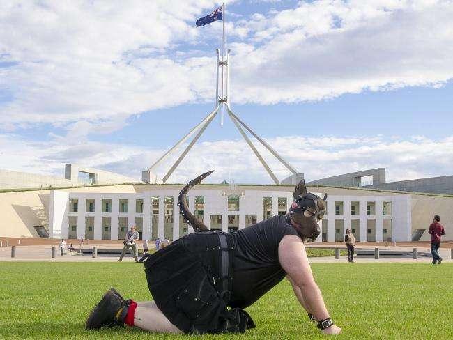 Новый вид релаксации в Австралии: люди переодеваются в собак