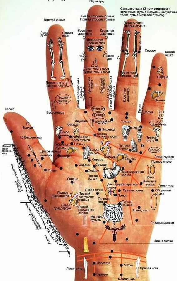 Диагностика организма по кистям рук и ладоням...